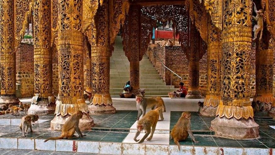 Monkeys at the monastery