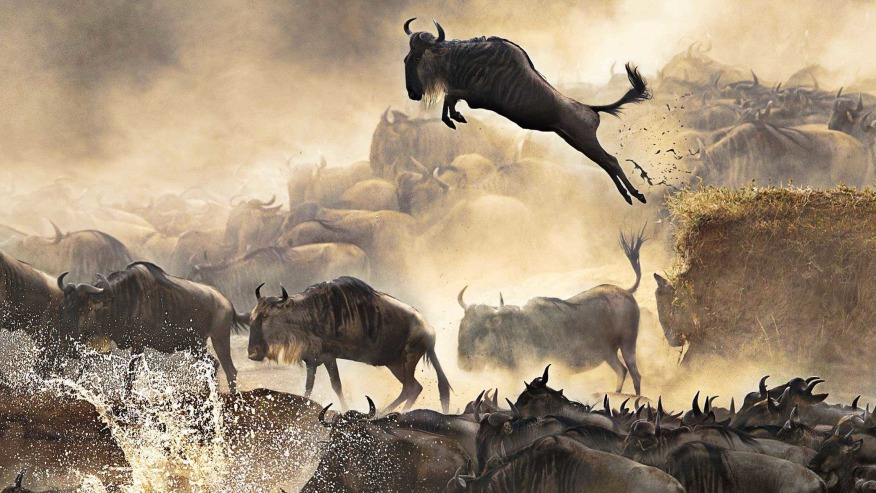 Head for a Wildebeest Migration Safari