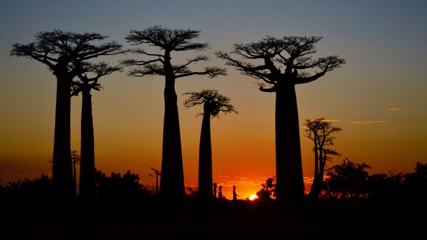 Discover Madagascar With an East to West Island Tour
