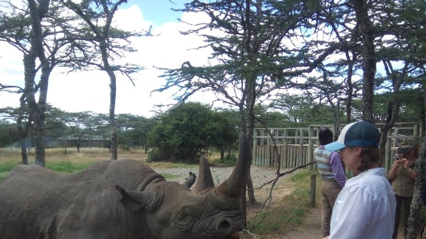 Baraka the blind rhino