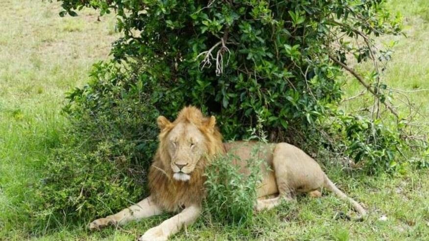 Thrill with this Kenyan game safari