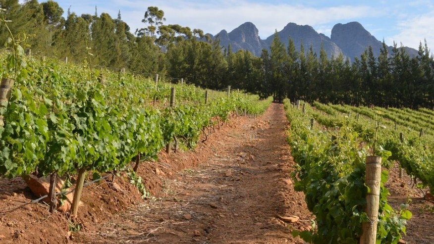 Tour of the Winelands