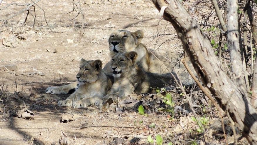 Spot rare Indian wildlife at Sariska