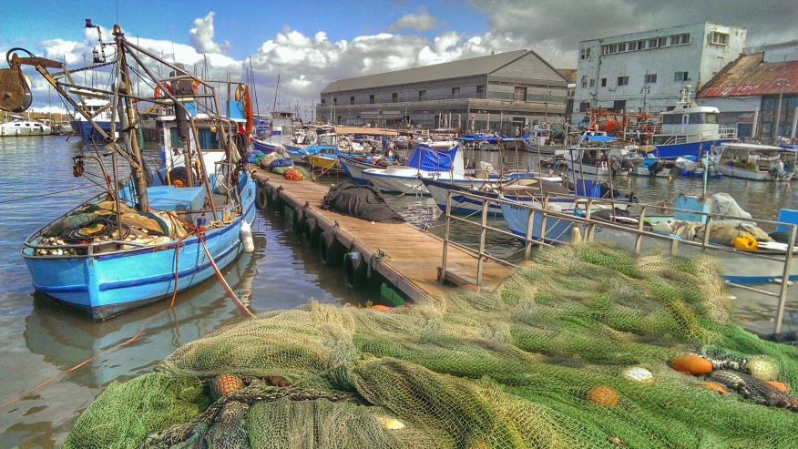 The Port of Jaffa