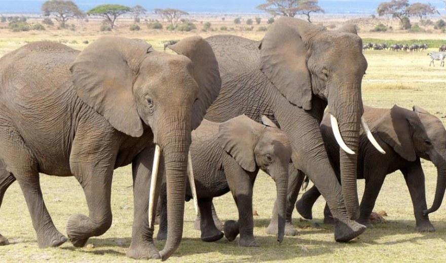 Kenya; Best tourist attractions