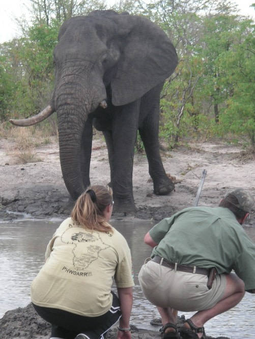 Encounter the Exhileration of Going on a Walking Safari