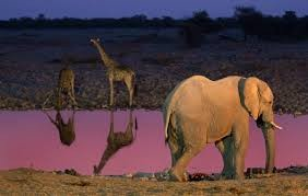Night Game Drives and Floodlit Waterholes