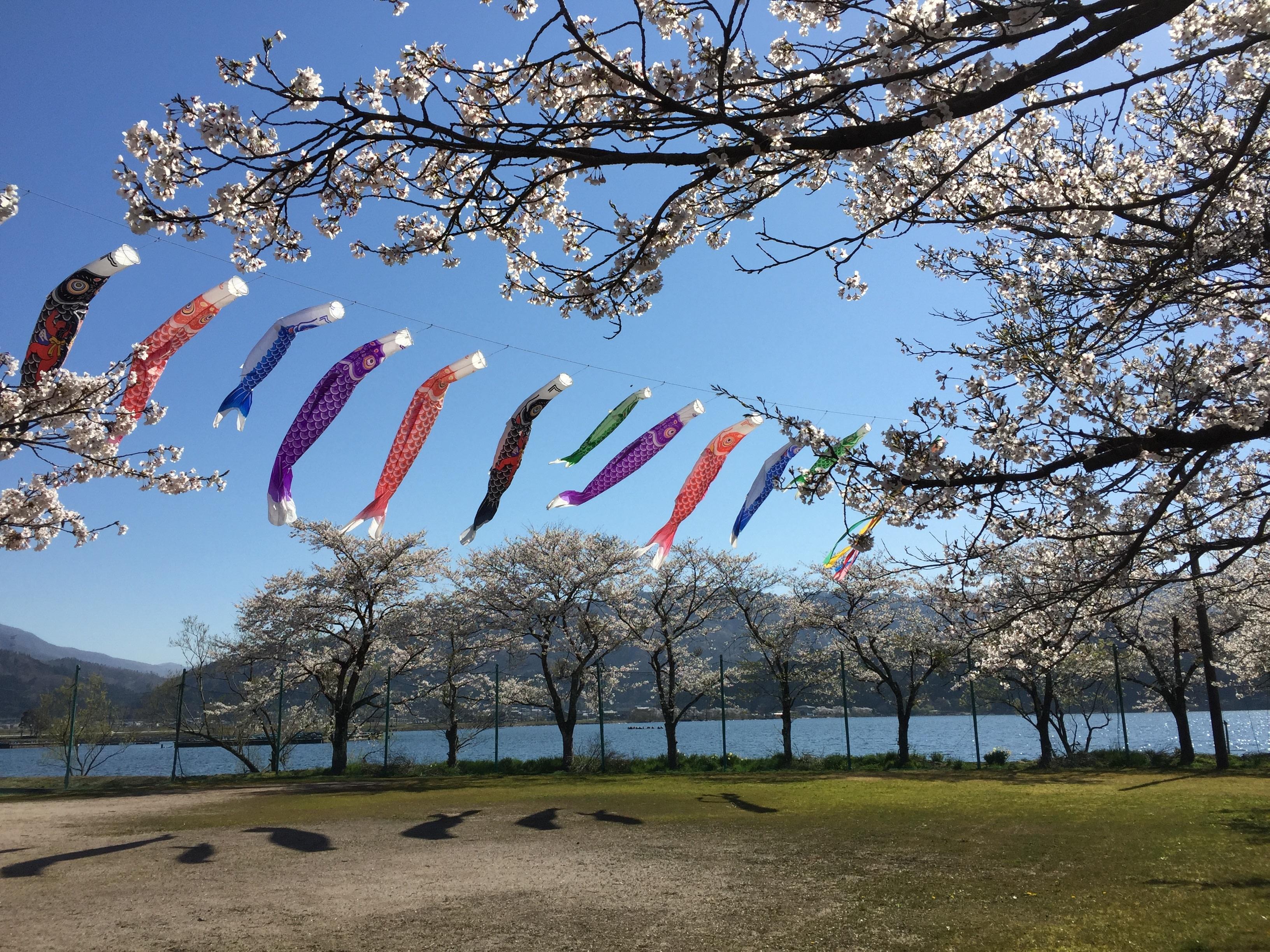 Spring in Full Bloom at My Hometown: Northern Region of Lake Biwa, Shiga, Japan