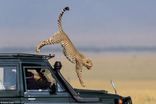 East Africa Safari Holidays