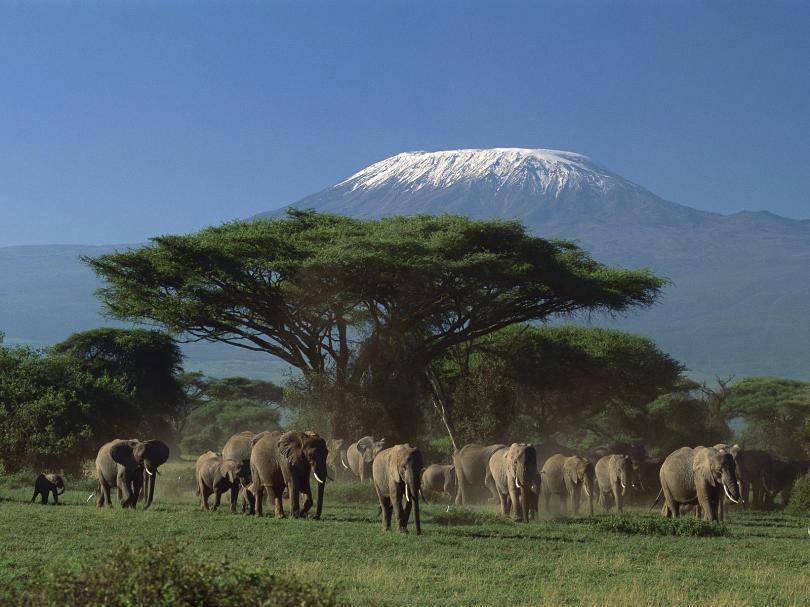 Planning to trek up Mount Kilimanjaro!! 5 Things You Must Know