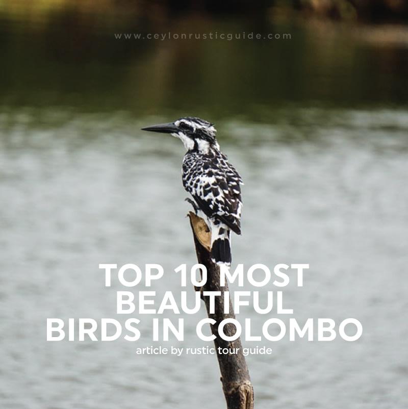 BIRDS IN COLOMBO