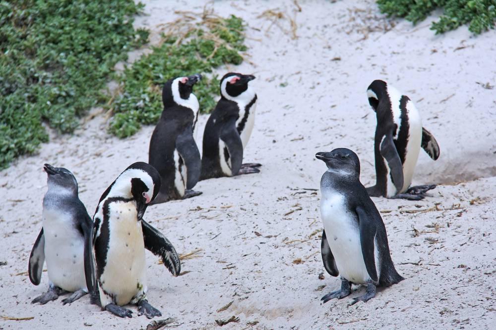 Winter season in Cape Town.