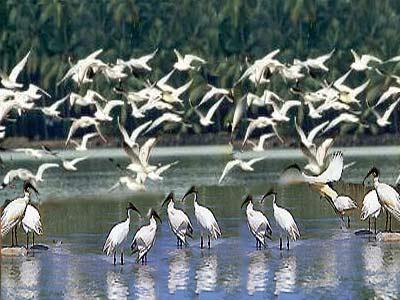 Kumarakoram Bird Sanctuary -  Kerala - India