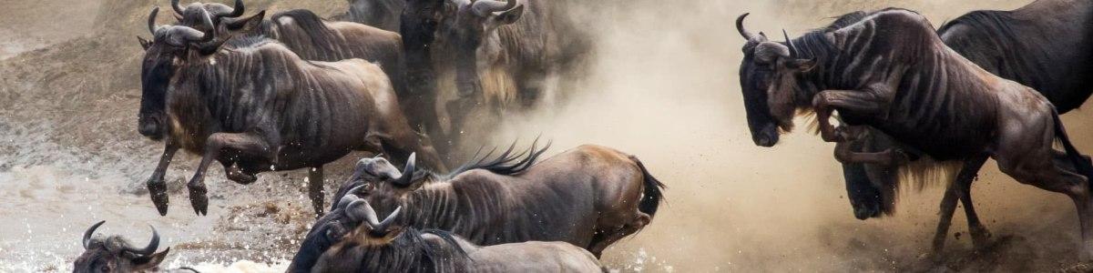 Serengeti-Insider-Safaris-in-Tanzania