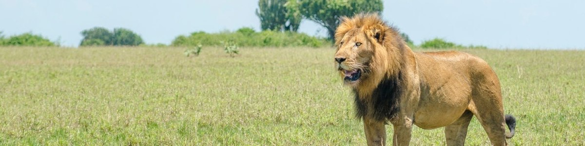 Wild-Travel-Safaris-in-Uganda
