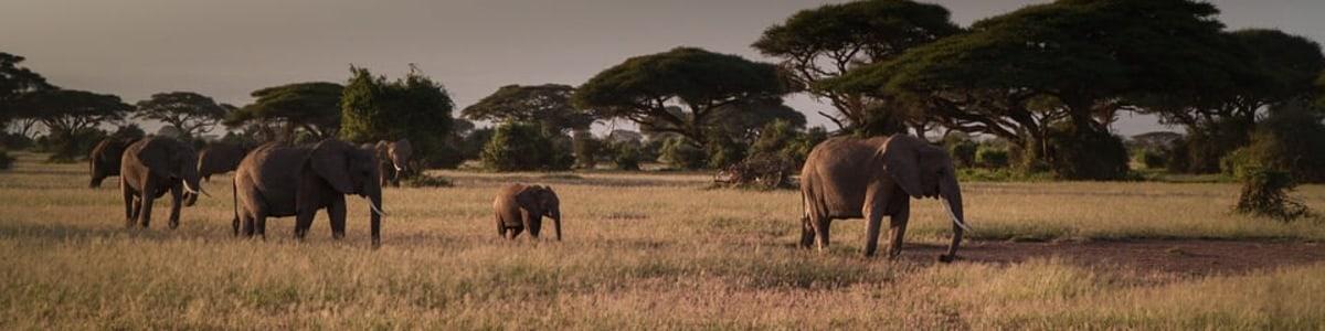 WILD-SIDE-KENYA-TOURS-AND-SAFARI-in-Kenya