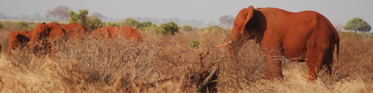 CAROLLE-TOURS-LTD-in-Kenya
