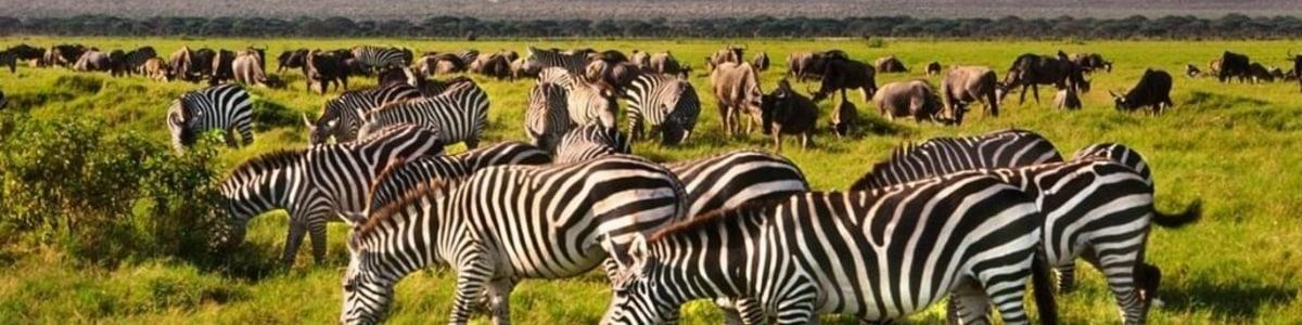 Radiance-Tours-in-Kenya