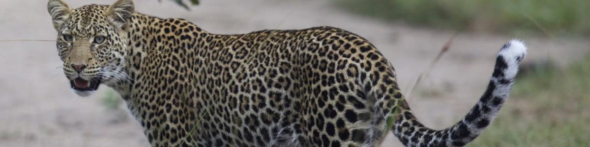 Oikos-Safaris-in-Uganda