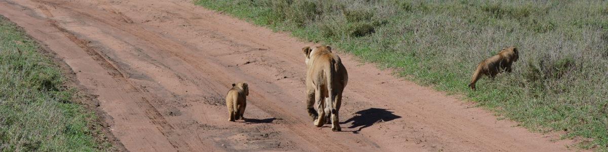 Mara-And-Serengeti-Expeditions-Ltd-in-Kenya