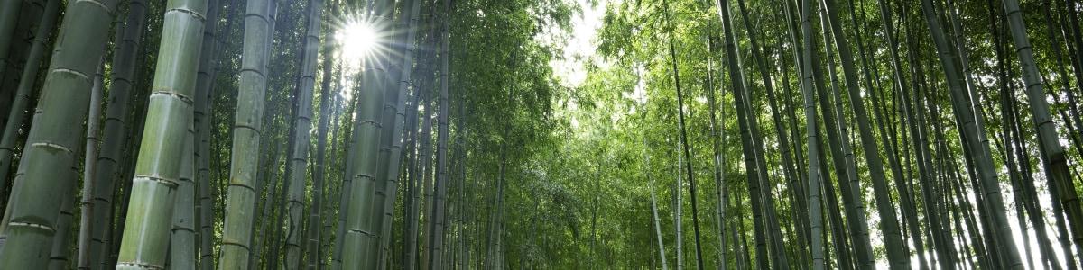 kyoto-tour-guide