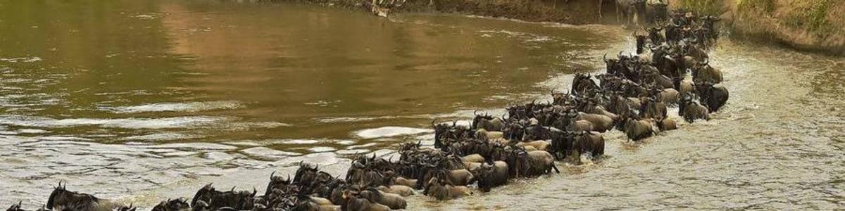 Baboon-Budget-Safaris-in-Kenya