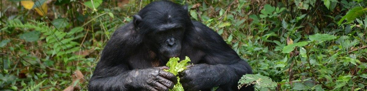 Kivusafarisandtours-Goma-DRC--And-Bukavu-in-The-Democratic-Republic-of-the-Congo