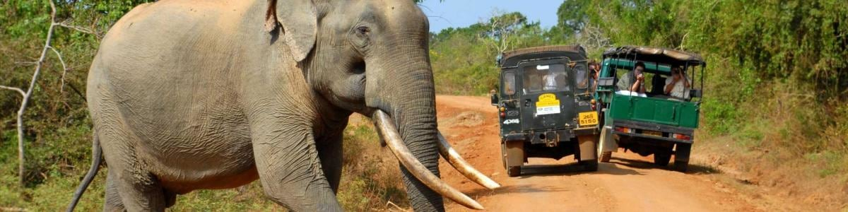 Go-Tours-Lanka-in-Sri-Lanka