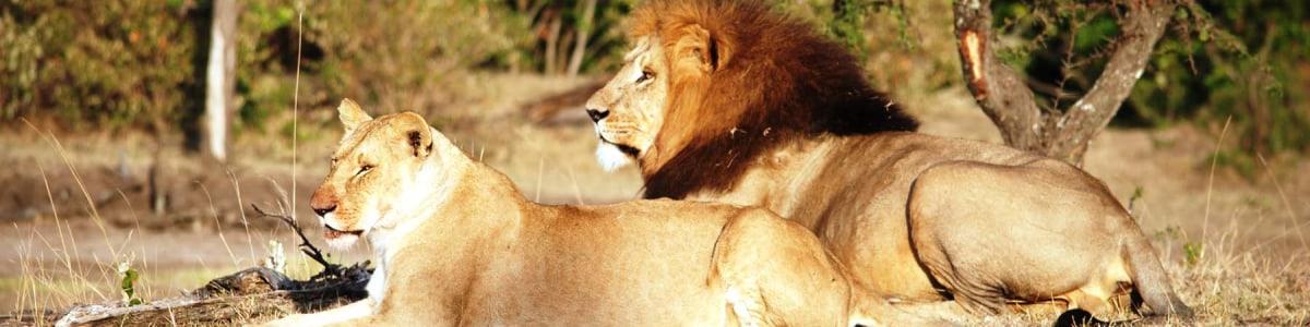 Transtrek-Safaris-in-Kenya