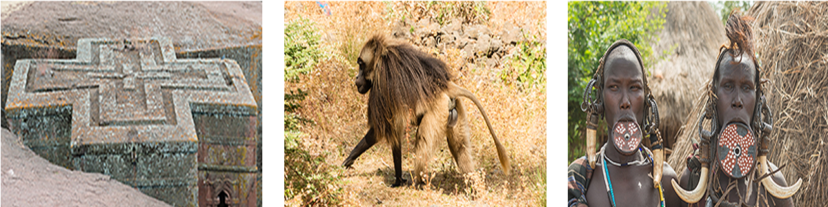 HIGH-AND-FAR-ETHIOPIA-TOUR-AND-TRAVEL-PLC-in-Ethiopia