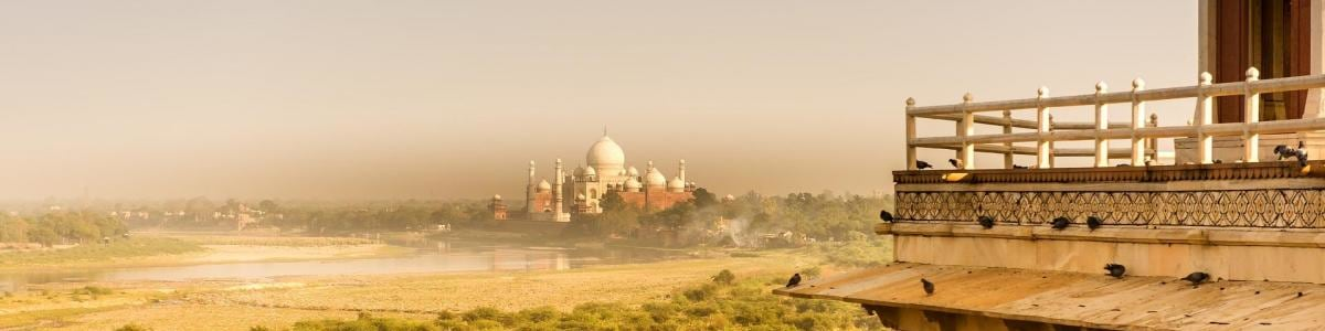 INDIA-TRAVEL-BEAR-in-India