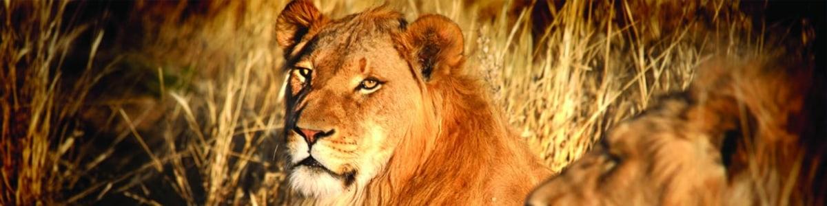 Pride-Safaris-Namibia---Enrico-in-Namibia