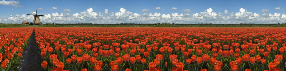amsterdam-tour-guide