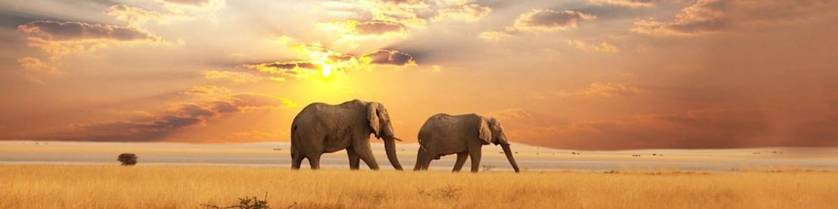 Phezulu-Safaris-in-Zimbabwe