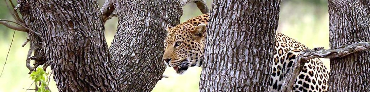Africa-Moja-Tours-&-Transfers-in-South-Africa