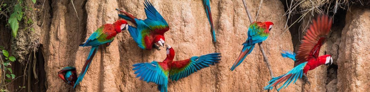 puertomaldonado-tour-guide