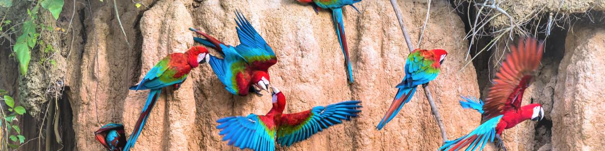 Tambopata-Wild-in-Peru