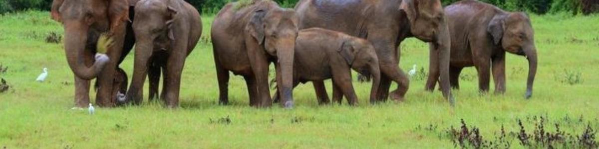 Darshana-Lanka-Tours-in-Sri-Lanka
