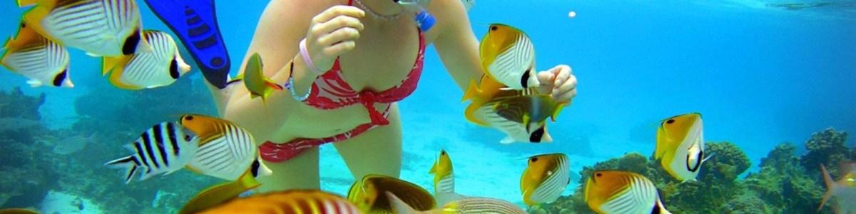 Cook-Islands-Tours-in-Cook-Islands