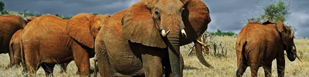 SIRMICHAELS-SAFARIS-in-Kenya
