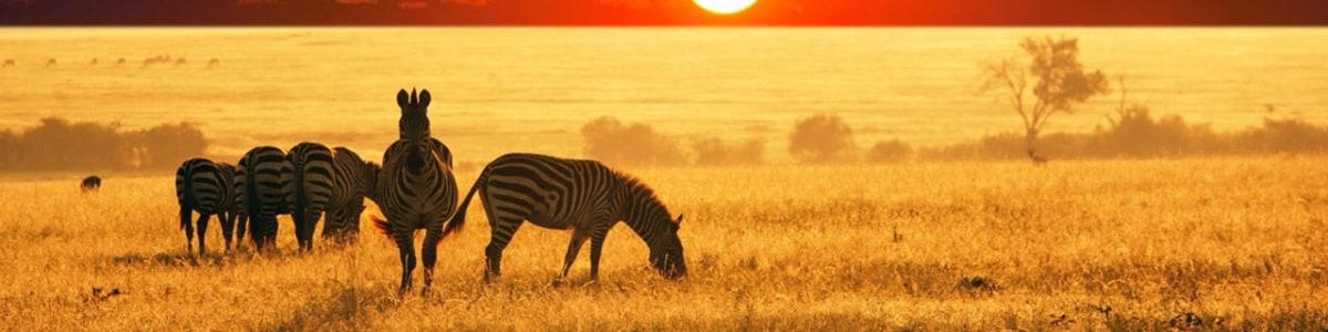 TRANSLEN-INVESTMENT-TOURS-&-SAFARI-in-Tanzania