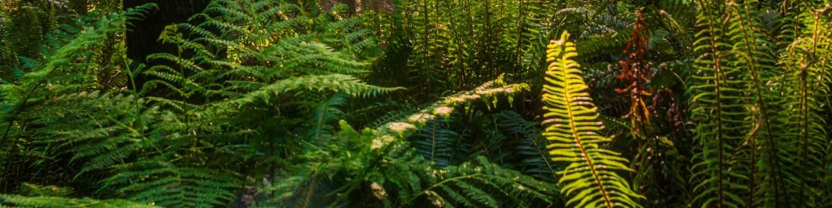 sequoianationalpark-tour-guide