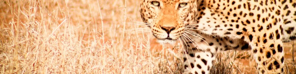 Shikwari-Transfers-&-Safaris-in-South-Africa