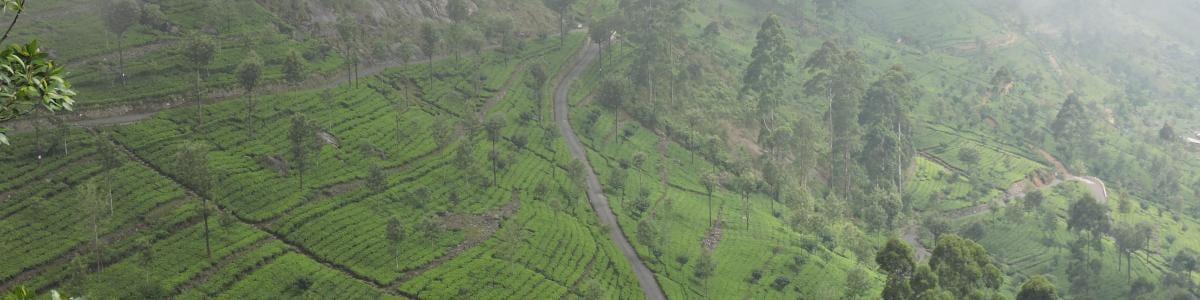 Dilra-Tours-in-Sri-Lanka