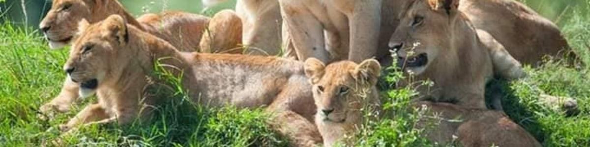 Pathway-Safaris-in-Kenya