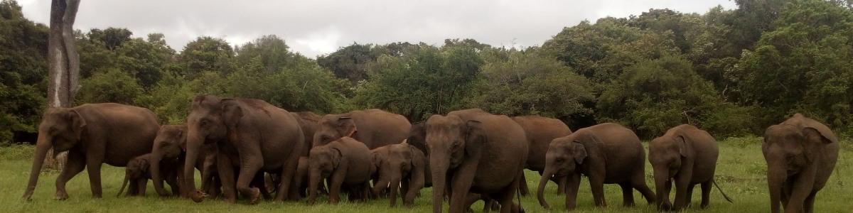 Lanka-Tours-&-Excursions-in-Sri-Lanka