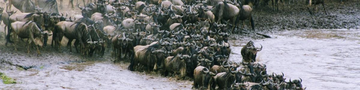 Seremara-Safaris-in-Kenya