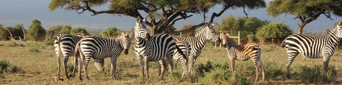 Embracing-African-Heritage-in-Kenya