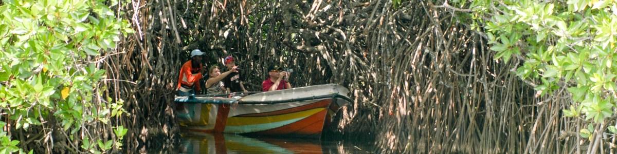 Ceylenese-Tours-in-Sri-Lanka