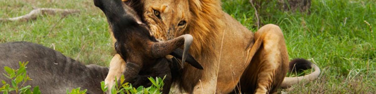 Sunstrip-Africa-Safaris-in-Kenya